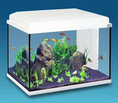 Aquarium Start 55L Blanc